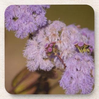 Purple Spiky Flower; No Text Coaster