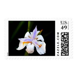 Purple Splash Postage Stamp