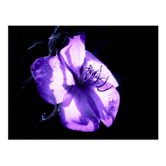 Purple Splendor Post Card