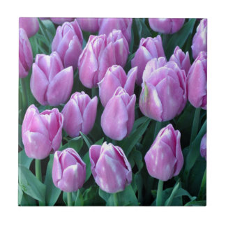 Purple spring tulips ceramic tile