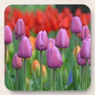 Purple spring tulips garden beverage coaster