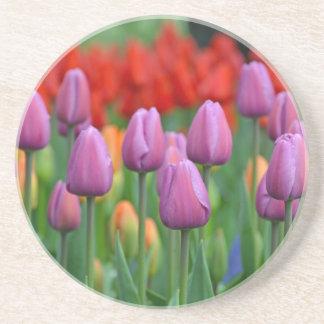 Purple spring tulips garden drink coaster