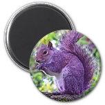 Purple Squirrel Refrigerator Magnet