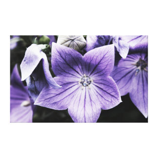 Purple Stages Canvas Print