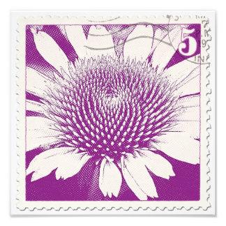 Purple Stamp Coneflower Photo Print