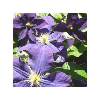 Purple Star Clematis Flowers with Greenery Canvas Print