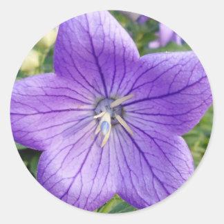 Purple Star Round Stickers