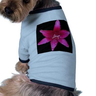 Purple starburst Lily Dog Shirt