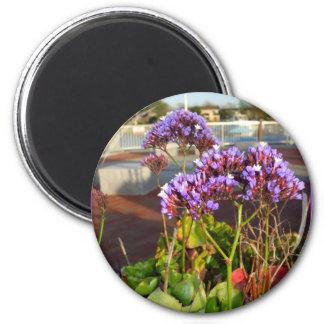 Purple Statice flowers magnet