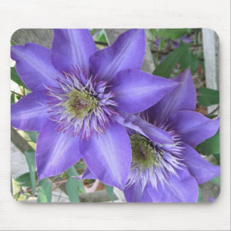 Purple Striped Clematis IMG_0821 Mouse Pad