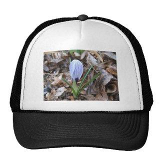 Purple striped Crocus flower bud Mesh Hats
