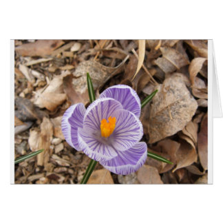 Purple Striped Crocus Flower Card
