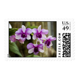 Purple Striped Orchid Flower Postage