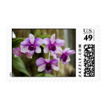 Purple Striped Orchid Flower Postage Stamps