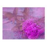 purple summer dream post card