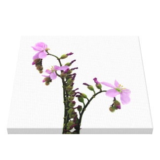 Purple Sundew Flowers Stretched Canvas Print