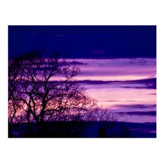 Purple Sunset Tree Silhouette art postcard