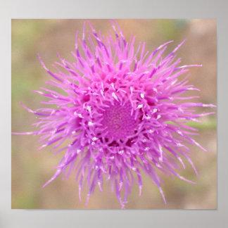 Purple Thistle Flower Poster