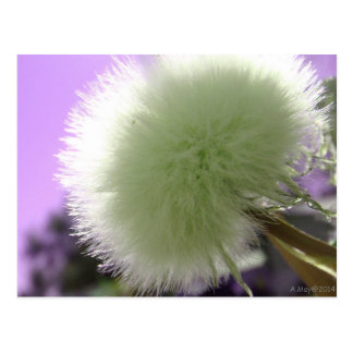 Purple Thistledown All Occasion Post Card