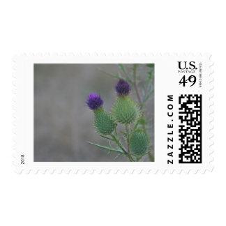 Purple Thistles Postage