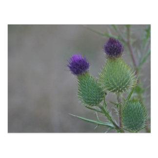 Purple Thistles Postcard