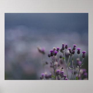 Purple thistles poster