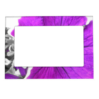 Purple Tinted Black and White Petunias Magnetic Frame