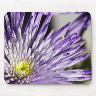 Purple Tipped Spider Mum Mousepad