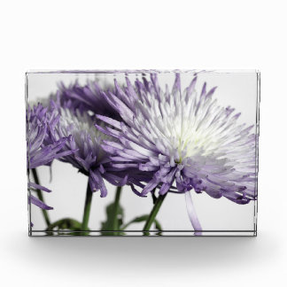 Purple Tipped Spider Mum Panorama Acrylic Print Acrylic Award
