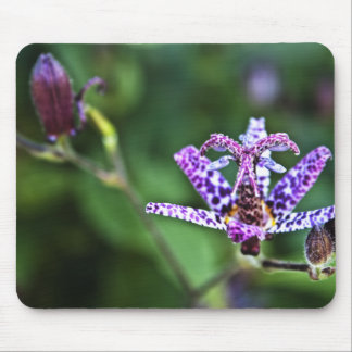 Purple Tricyrtis Toad Lily flower Mouse Pad