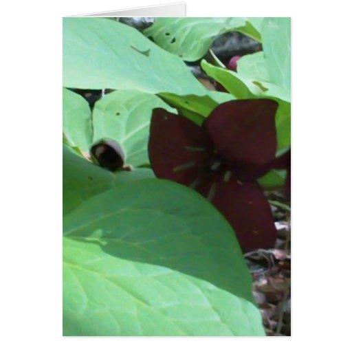 Purple Trillium wildflower and greenery Greeting Card