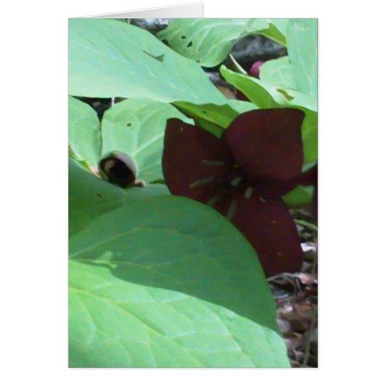 Purple Trillium wildflower and greenery Card