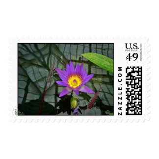 Purple Tropical Water Lily Postage