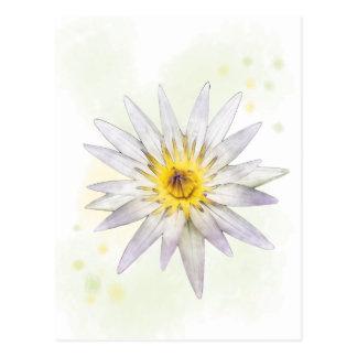 Purple Tulip Brooklyn Botanical Garden Postcard