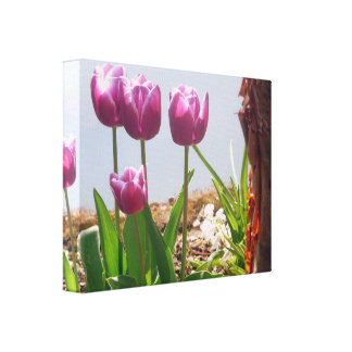 Purple Tulip Flowers By Lake Canvas Print