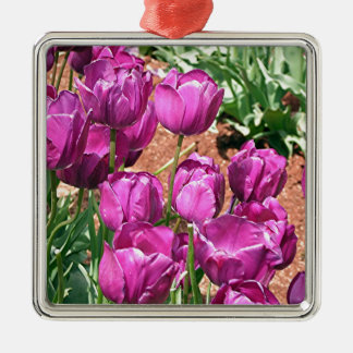 Purple Tulip flowers in bloom 3 Christmas Ornament