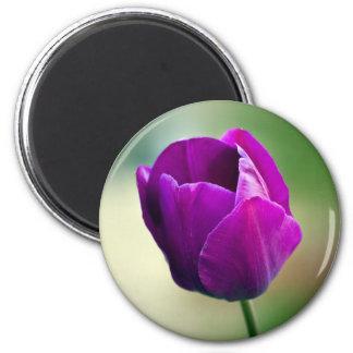 Purple Tulip 2 Inch Round Magnet