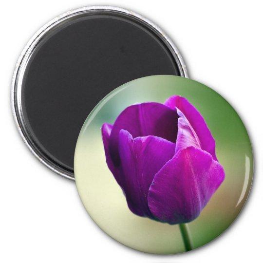 Purple Tulip Magnet