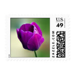 Purple Tulip Stamp