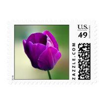 Purple Tulip Stamp