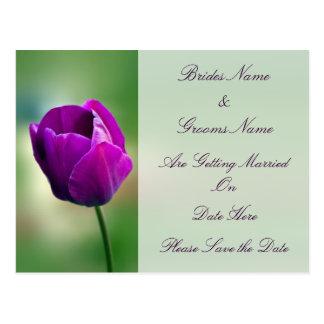 Purple Tulip wedding save the date Postcard