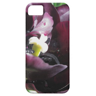 Purple tulip with droplets in spring iPhone SE/5/5s case