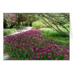 Purple Tulips (3033) Greeting Cards