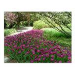 Purple Tulips (3033) Postcard