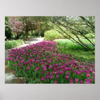 Purple Tulips (3033) Poster