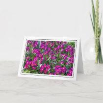 Purple tulips and primroses greeting card