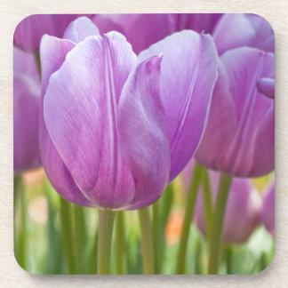 Purple Tulips Blooming in Spring Drink Coaster