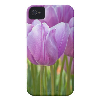 Purple Tulips Blooming in Spring iPhone 4 Cover