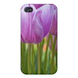 Purple Tulips Blooming in Spring iPhone 4 Covers