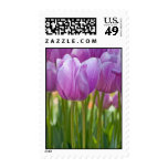 Purple Tulips Blooming in Spring Stamp